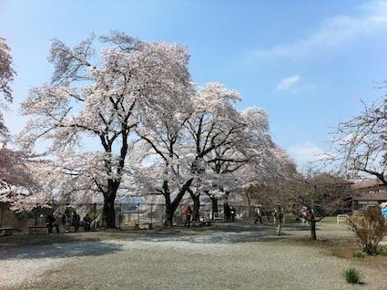 0402桜の園.JPG