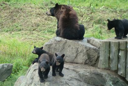 0812熊の親子.jpg