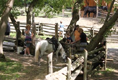 0812馬と人.jpg