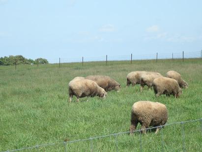0822羊.jpg