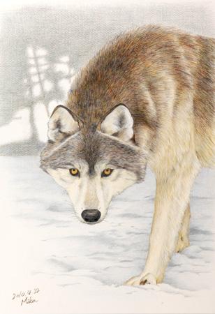 雪の上の狼1.jpg
